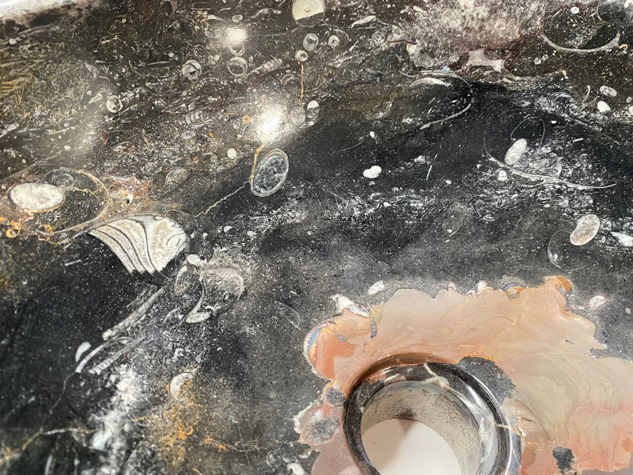 Picture of Genese Fossil Vessel in Noir (110)